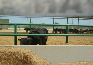 Livestock Terminal Sokhna Port - Egypt
